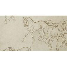 Horses col.1